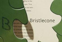 Bristlecone – Brochure